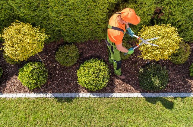 Gardening Services in Forster-Tuncurry